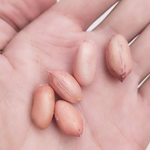 山東省臨沂市蘭陵縣 花生米長期供應需要聯系