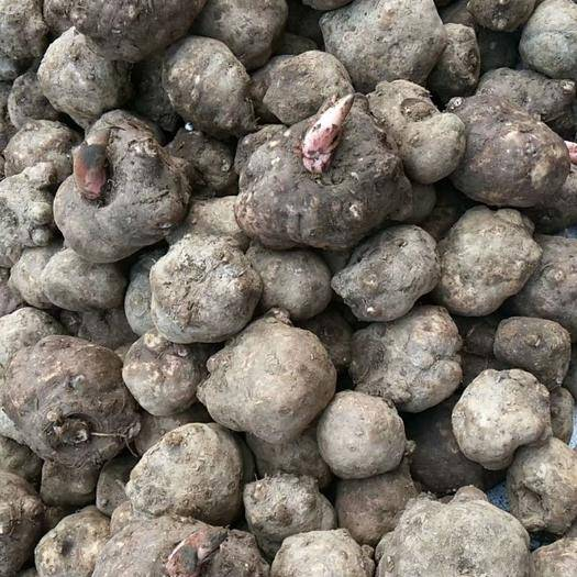 湖南省郴州市資興市 新鮮魔芋