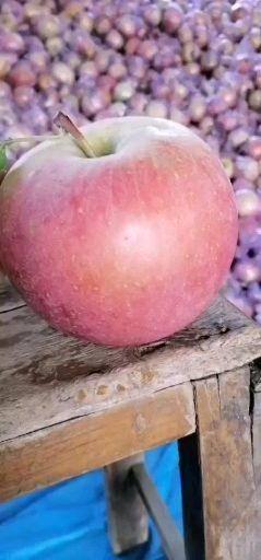山東省臨沂市臨沭縣紅富士蘋果 70mm以上 統貨 膜袋
