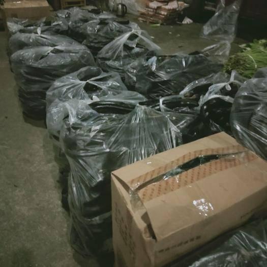 重慶市武隆區紫長茄 30~40cm 長茄
