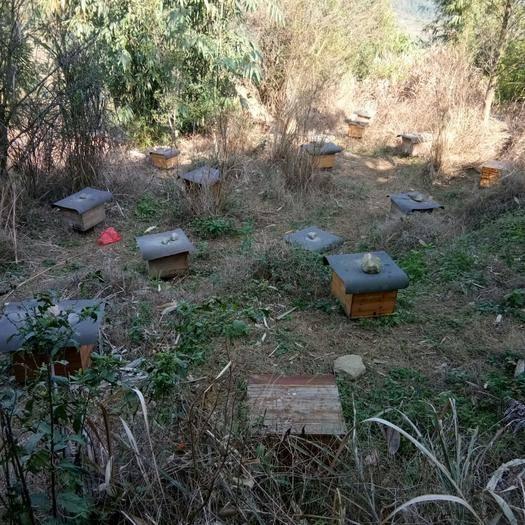 廣西壯族自治區玉林市容縣中華蜜蜂