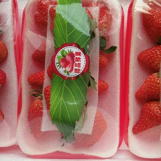 江蘇省徐州市賈汪區 草莓大量上市,品質越來越好,品種多樣,寧玉,寧豐,妙香甜查理