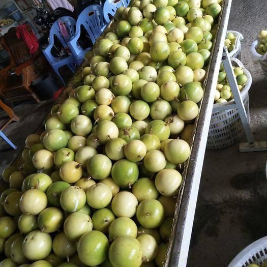 廣東省揭陽市揭西縣 60畝黃金百香果園自產自銷,可實地考察,可包園