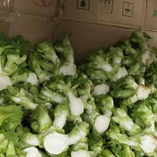 貴州省黔西南布依族苗族自治州興義市 本地兒菜大量供應