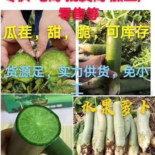 山東省濰坊市寒亭區 濰坊青蘿卜,口感脆甜,價格便宜,無人工費