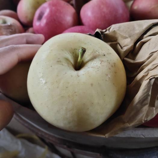 山東省煙臺市棲霞市 煙臺棲霞奶油糖心蘋果