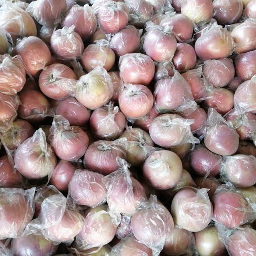 河南省商丘市虞城縣紅富士蘋果 自家種植有機水果
