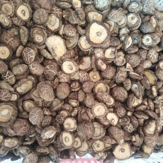 河南省南陽市西峽縣香菇9608 干香菇 2.5cm~4cm