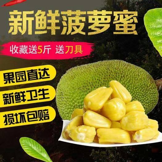 海南省三亞市海棠區 海南菠蘿蜜 30斤黃肉干苞包熟包甜 三亞特產一件代發包郵