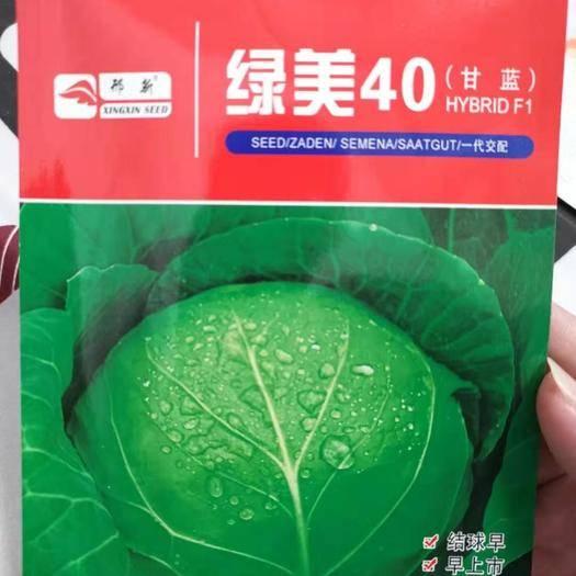 河南省商丘市夏邑縣綠甘藍種子 綠美40,冬性強,耐抽苔,正圓型,葉片脆嫩,早春甘藍種子