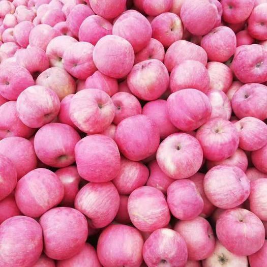 遼寧省錦州市太和區寒富蘋果 75mm以下 全紅 光果