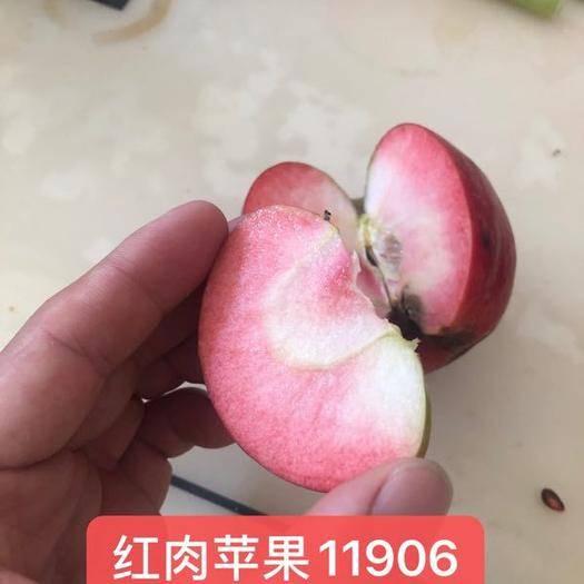 河南省許昌市鄢陵縣 紅肉蘋果雙十一特惠。歡迎各界成功人士訂購。