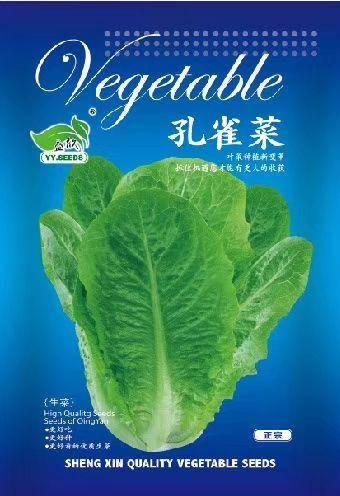 河南省商丘市夏邑縣小白菜種子 孔雀菜種子 快菜種子 新型特色品種