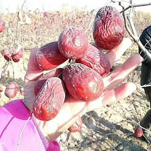 新疆維吾爾自治區阿拉爾市阿拉爾市和田大棗 質量第一品質至上