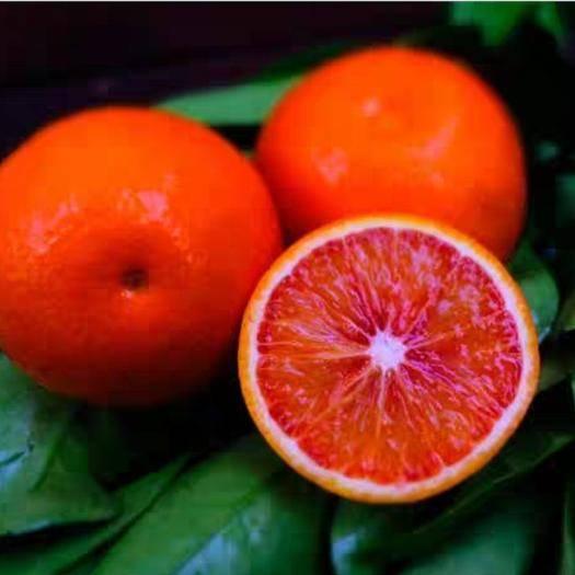 山東省臨沂市平邑縣臍橙樹苗 臍橙苗,橙子樹苗包成活保純度死苗補發帶葉發貨