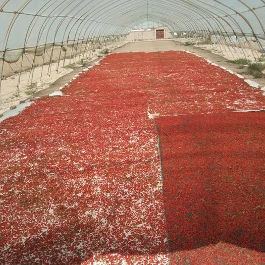 甘肅省酒泉市瓜州縣 正品農家枸杞  色好肉厚  粒大。高原蟲草 藥效好形壯大。