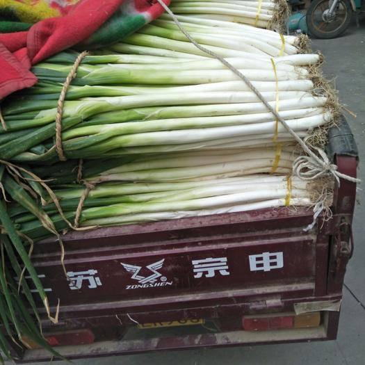 山東省棗莊市滕州市長白大蔥 混裝通貨 毛蔥
