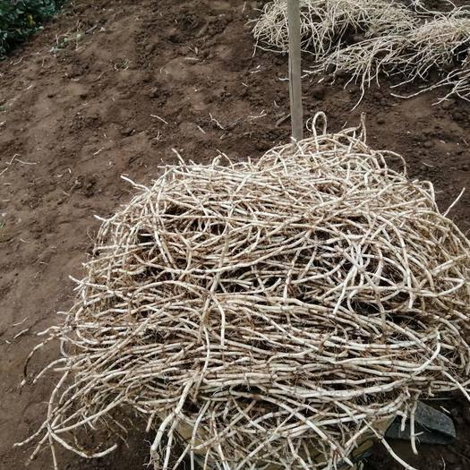 貴州省貴陽市烏當區白莖魚腥草 純天然無化學物!采用農家肥耕種