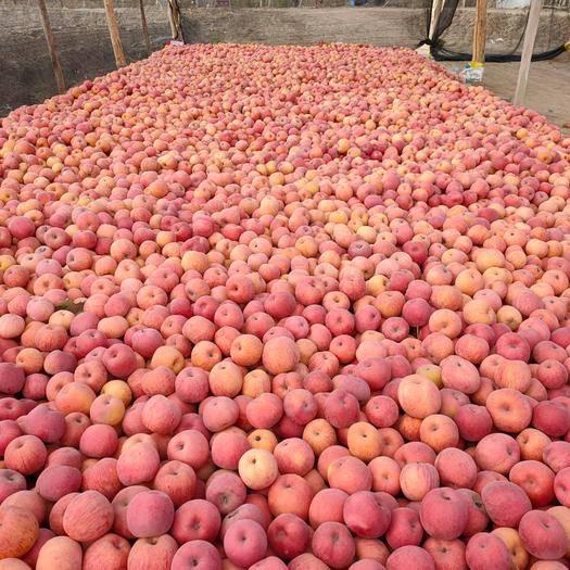 重慶市巫山縣 正宗新疆冰糖心蘋果