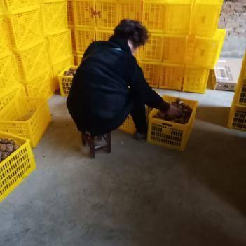 亞特獼猴桃冷庫4萬斤,中果有貨