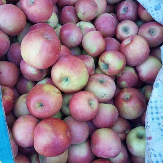 內蒙古自治區赤峰市寧城縣 1.5一斤蘋果