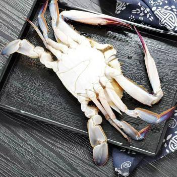 批發梭子蟹  青蟹  大螃蟹  生鮮海蟹