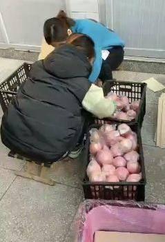 紅加膜紅富士蘋果熱銷中。貨源充足,保證質量,常年代收!