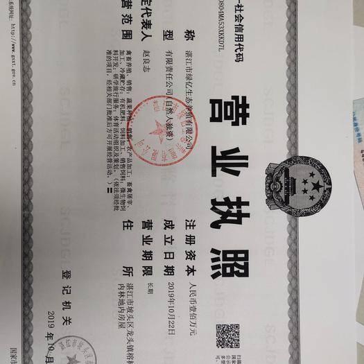 广东省湛江市坡头区 纯种黑羊