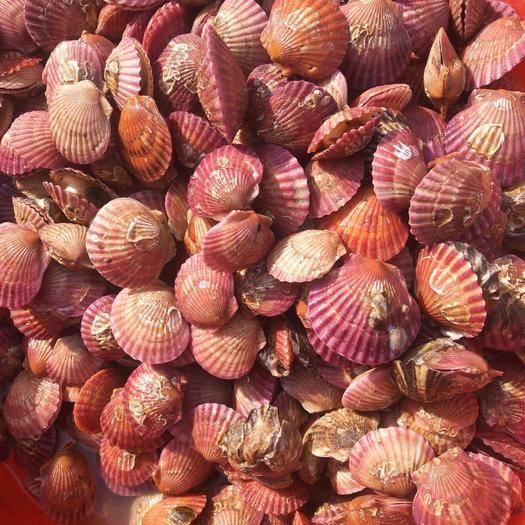 遼寧省錦州市太和區 渤海灣扇貝,自己船出海打撈