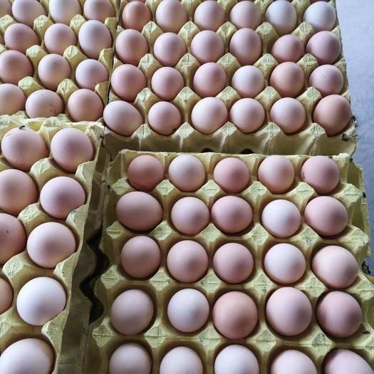 河南省焦作市武陟縣土雞蛋 富瑞生態農家蛋,綠色營養健康,24小時為客戶服務!!!