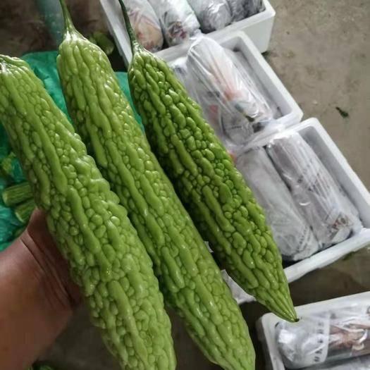 云南省保山市施甸縣綠苦瓜 蔬菜種類繁多