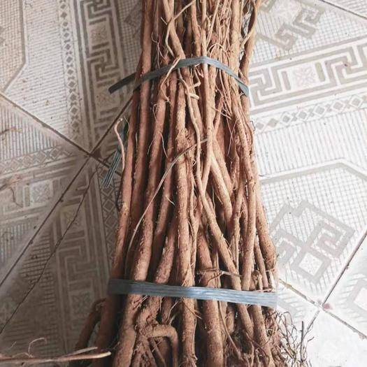 廣西壯族自治區柳州市城中區 純野生千斤拔,成捆