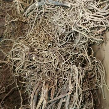 【产地直销】 缬草根 缬草