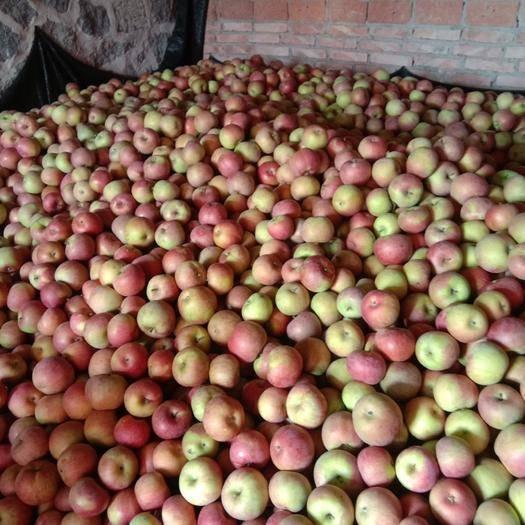 遼寧省大連市普蘭店區 自家山坡沙土蘋果,喂農家肥羊糞,果味甜脆。