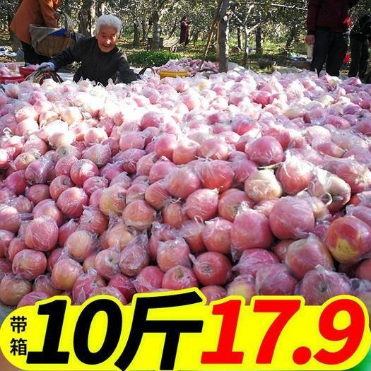 陜西省西安市周至縣 (正常發貨)陜西紅富士蘋果新鮮現摘脆甜多汁10斤包郵