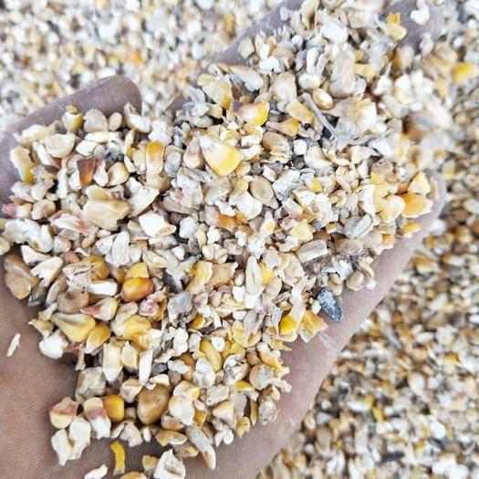 河南省商丘市夏邑縣 長年出售碎玉米