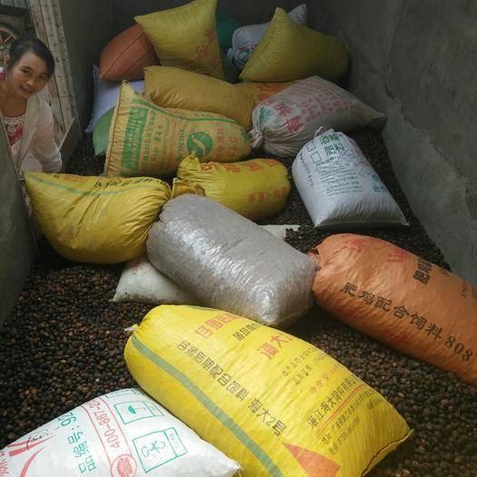 貴州省黔西南布依族苗族自治州冊亨縣 落地茶籽上炕了,需要的老板聯系