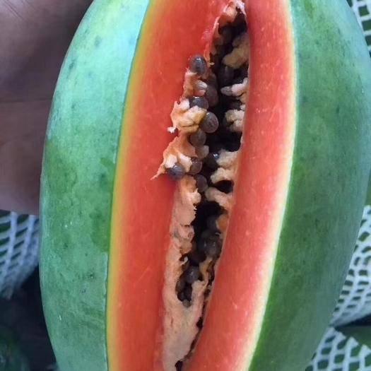 云南省西雙版納傣族自治州景洪市 生態水果木瓜