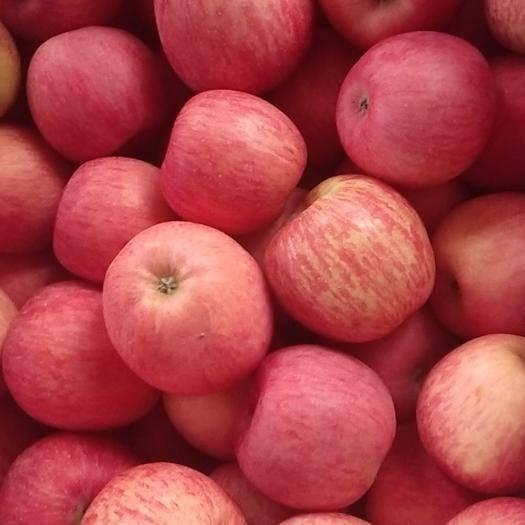 甘肅省隴南市西和縣 甘肅禮縣新鮮香甜紅富士蘋果