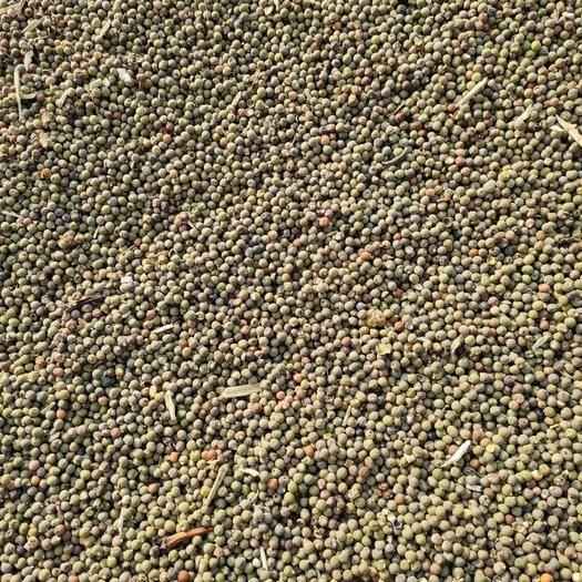 河北省衡水市棗強縣秋葵籽 一萬多斤