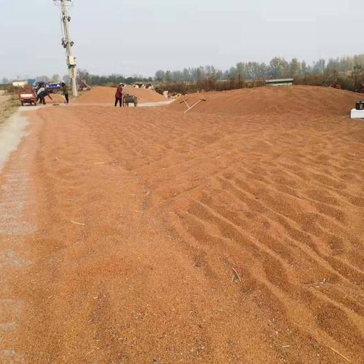 安徽省阜陽市潁東區 現有紅英子高粱2000噸,價格合理,可實地考察,歡迎洽談