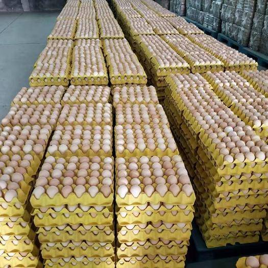 """河北省石家莊市辛集市普通雞蛋 《乘乘蛋業》 """"國內最專業的蛋品運營商"""" :主要為供應鏈配送"""