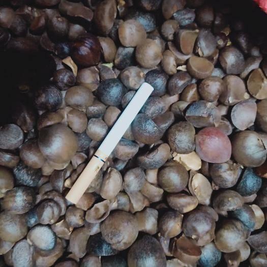 廣西壯族自治區河池市巴馬瑤族自治縣 本產品高山珍珠茶籽,出油率高25~30,又稱小米茶,干8左右