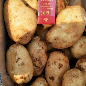 云南麗薯6號