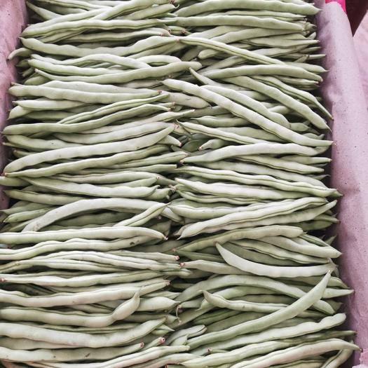 廣東省廣州市從化區 紫花四季豆