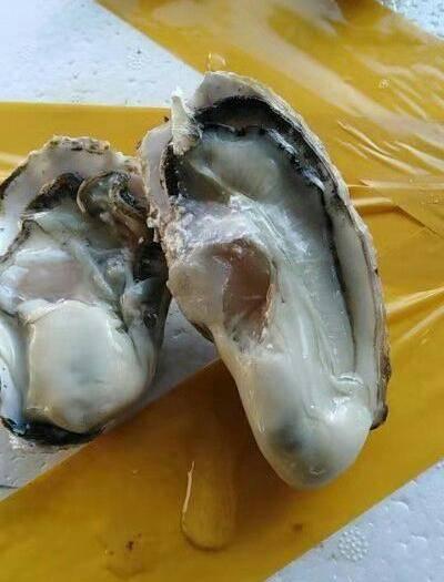 山東省威海市榮成市乳山牡蠣 海水 鮮活水產