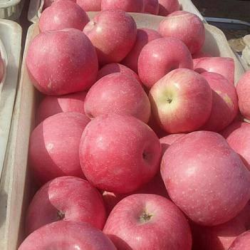 红富士苹果 75mm以上 统货 纸袋