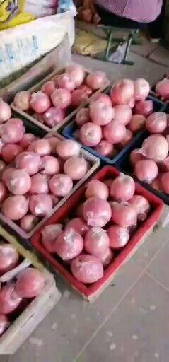 山西省運城市臨猗縣臨猗蘋果 產地直供 對接超市 水果店  精品水果產地供應鏈