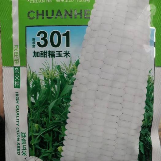 河南省鄭州市二七區 白甜糯玉米種子 鮮食玉米種子  果穗粗大 產量高 高抗病