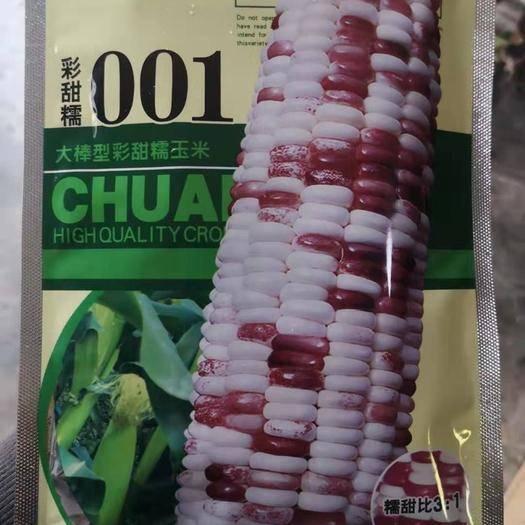 河南省鄭州市二七區 彩甜糯玉米種子 大棒型 糯甜比3:1 口感香甜 皮薄無渣